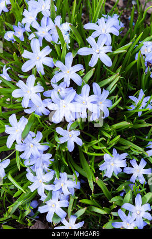 Beautiful blooming spring flowers - Stock Photo