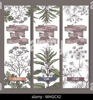 Set of three color vector banners with coriander, sesame, caraway sketch. Culinary herbs collection. - Stock Photo