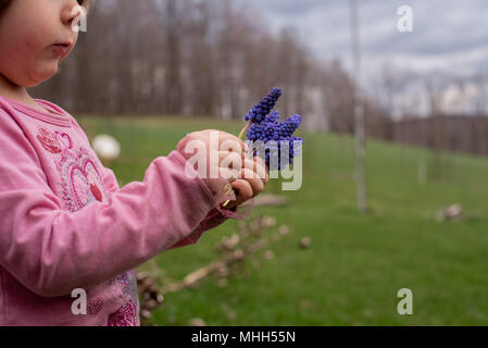 A little girl holds a bouquet of  purple hyacinths flowers in the spring. - Stock Photo