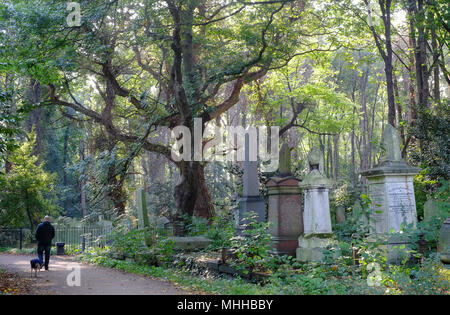 A man walks his dog in spring,  Tower Hamlets Cemetery Park, Mile End, East London UK. one of the Magnificent Seven grand Victorian burial grounds. - Stock Photo