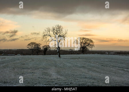 Sunrise over Staffordshire fields in winter.Lichfield ,Uk.Trees ,fields covered with frost and dramatic, dark sky with heavy clouds during sunrise. - Stock Photo