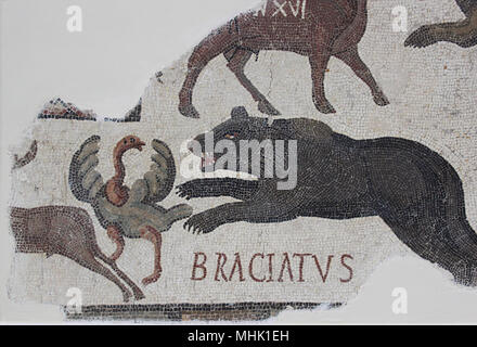 Mosaic showing a bear called 'Braciatus' attacking an ostrich in a Roman arena during a wild beast display. From Maxula, the work is now in the Bardo. - Stock Photo