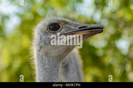 Ostrich feather head - Stock Photo