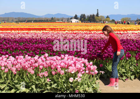 Young girl with long hair wearing boots and blue jeans while touching a purple tulip in the fields during the Skagit Valley Tulip Festival in Mount Ve - Stock Photo