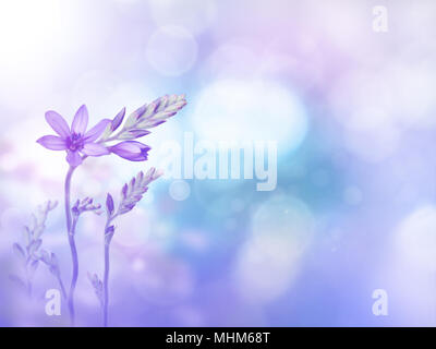 Light purple freesia flowers and buds on the violet turquoise blurred background. Floral desktop. Toned image. - Stock Photo