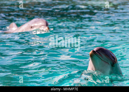 dolphin close up portrait while looking at you - Stock Photo