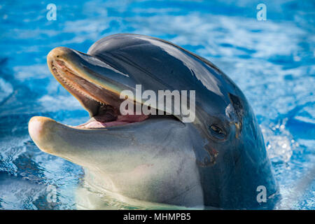 dolphin close up portrait while looking at you while smiling - Stock Photo