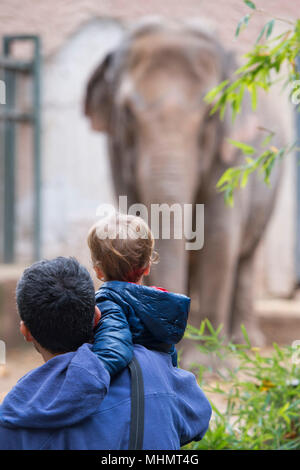 children at the zoo looking at the elephant - Stock Photo