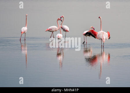 water reflection and beautiful light on pink flamingo group - Stock Photo