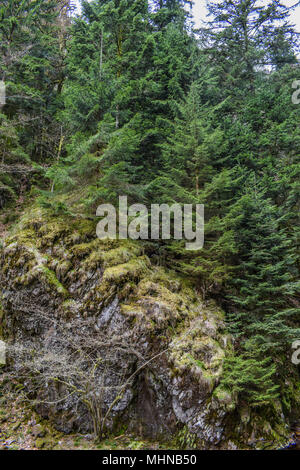 rocks with trees in Schwarzwald Germany - Stock Photo