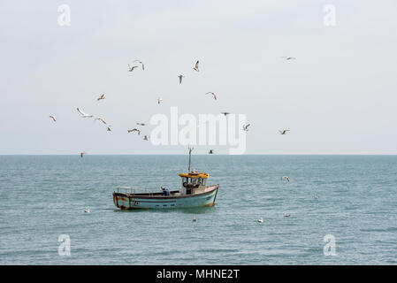 A small traditional fishing boat out in a calm sea is swarmed by gulls and seagulls. - Stock Photo