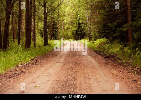 Swedish forest road leads the viewer through early summer greenery of a turn to the left into the unknown