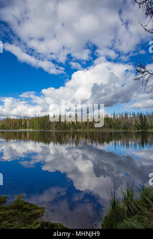 Forest lake with beautiful clouds and blue sky reflections on water surface surrounded by coniferous trees and dead fir trees - Stock Photo