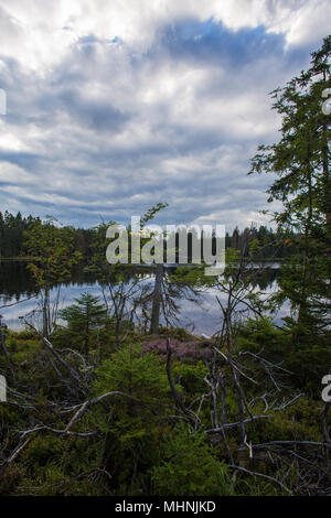 Rough Harz mountain forest and lake Oderteich with thick cloud planes in the sky - Stock Photo