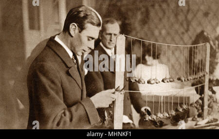 Albert, Duke of York (1895-1952) (later King George VI) inspects all aspects of the production of Armistice Day Poppies ('Flowers of Flanders') being produced at the Headquarters of Earl Haig's Fund at Apsley House     Date: 1925 - Stock Photo