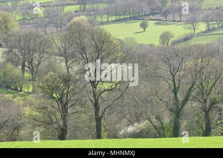 Hedge tree patterns near Blaenpennal Cardiganshire, Wales, UK - Stock Photo