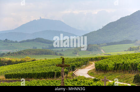 Famous wine route in Alsace, France - Stock Photo