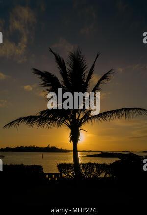 Palm tree silhouette over Hamilton Harbour, Bermuda. - Stock Photo