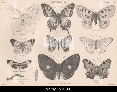 BUTTERFLIES. Swallow tail. Apollo. Pale-clouded yellow. Peacock 1898 old print - Stock Photo
