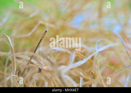 Looking for a needle in a haystack on field - Stock Photo