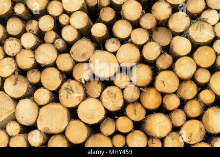timber harvesting in the bavarian alpes,Germany Stock Photo