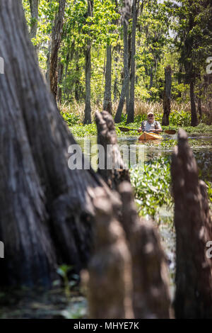 LaPlace, Louisiana - Al Cholger participates in a kayak tour of Shell Bank Bayou near New Orleans. The 'knees' of a cypress tree are in the foreground - Stock Photo