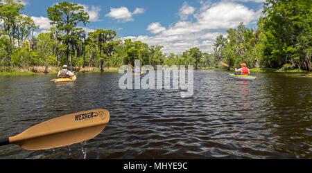 LaPlace, Louisiana - An environmental kayak tour in the  Maurepas Swamp Wildlife Management Area near New Orleans. The tour was organized by Louisiana - Stock Photo