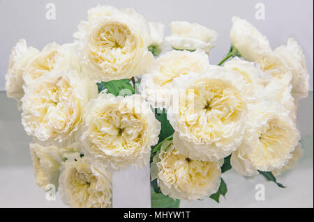 White roses with green middle is an original selection of a large bouquet on sale in the flower market. Modern elite varieties. - Stock Photo