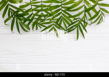 summer flat lay. fresh palm leaves border on white wooden background with space for text. top view. summer vacation concept. travel and wanderlust - Stock Photo