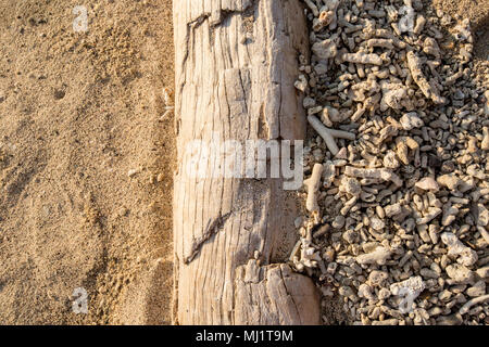 Driftwood on a beach seperating area of broken coral from sand - Stock Photo