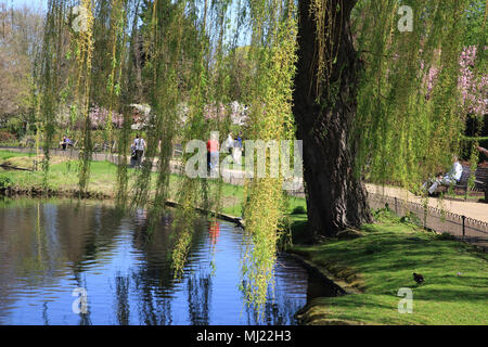 Spring sunshine in Queen Mary's Gardens, in Regents Park, in London, England, UK - Stock Photo
