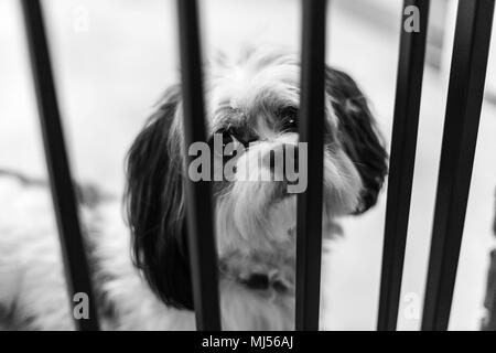 Puppy  posing for model portfolio, locked up in jail. inocent look. - Stock Photo
