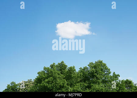 blue sky with single white cloud over green treetops, horizontal nature background with copy space - Stock Photo