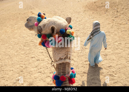 High angle view of Bedouin leading camel through the desert. - Stock Photo