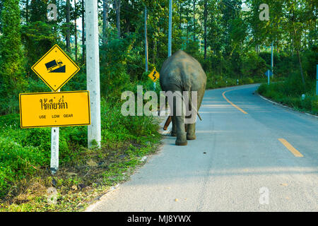 Elephant walking lonely on up hill country road with up hill trafic sign in rural of Thailand - Stock Photo