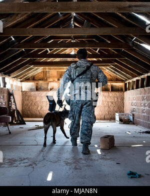 Staff Sgt. Ryne Wilson, 99th Security Forces Squadron military working dog handler, and his MWD, Seneca, search a room for explosives during a training exercise at Nellis Air Force Base, Nev., April 26, 2018. The exercise trains the handlers and their dogs to always be aware of their environment. (U.S. Air Force photo by Airman 1st Class Andrew D. Sarver) - Stock Photo