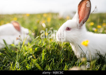 Baby white rabbit in spring green grass background - Stock Photo
