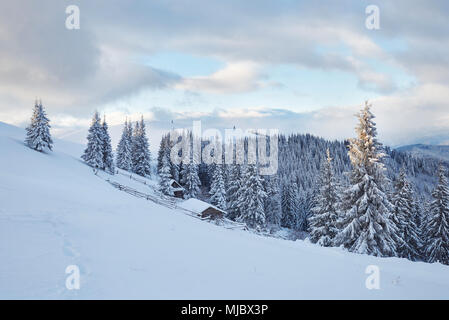 Majestic white spruces glowing by sunlight. Picturesque and gorgeous wintry scene. Location place Carpathian national park, Ukraine, Europe. Alps ski  - Stock Photo