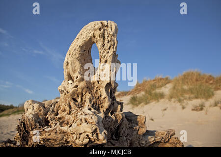 Driftwood on the West beach, peninsula Fischland-Darss-Zingst, Mecklenburg-West Pomerania, Germany, - Stock Photo
