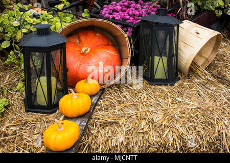 Pumpkins on Thanksgiving Day in Québec - Stock Photo