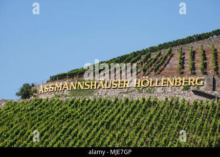 Vineyard Asmmanshauser Höllenberg, Assmannshausen, Rüdesheim am Rhein, Upper Middle Rhine Valley, UNESCO World Heritage Site, Hessia, Germany, Europe - Stock Photo