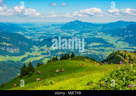 Hiking trail from the Fellhorn, 2038m, to the Söllereck, 1706m, Illertal with Grünten in the background, 1783m, Allgäu Alps, Bavaria, Germany, Europe - Stock Photo