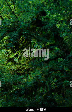 View into a dark forest, tree with moss at dusk - Stock Photo