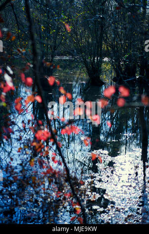 Red leaves on a lake in autumn colors and backlight with reflection in the water - Stock Photo