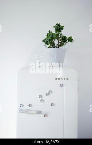 DIY, flower pot on fridge, fridge magnets made of bottle caps - Stock Photo