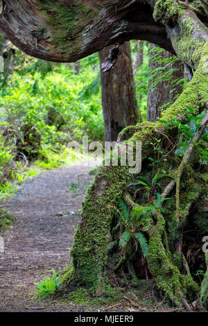 Firewood Cedar Vancouver Island