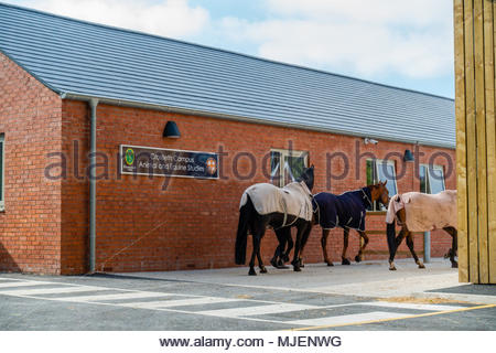 Myerscough College, the new multi million pound Croxteth Campus College Education hub, for Animal and Equine Studies, based at Croxteth Country Park, Merseyside, opens the new building for a student taster day, in order that school leavers can have a look at the new facilities, as staff return several horses to the stables. Croxteth Park, Liverpool England UK - Stock Photo