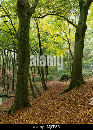 sunspots and sunrays shining throught the leaves from the beech trees in november - Stock Photo