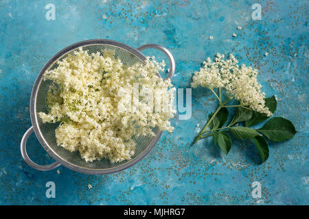 Elderflower blossom flower in colander. The flowers are edible and can be used to add flavour and aroma to both drinks and desserts. - Stock Photo