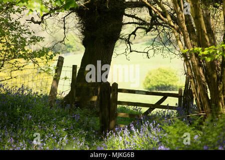 A wooden country gate marked Private on the edge of public woodland North Dorset England UK - Stock Photo